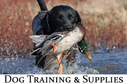 Dog Training & Supplies