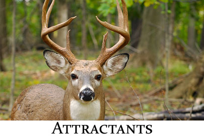 Attractants